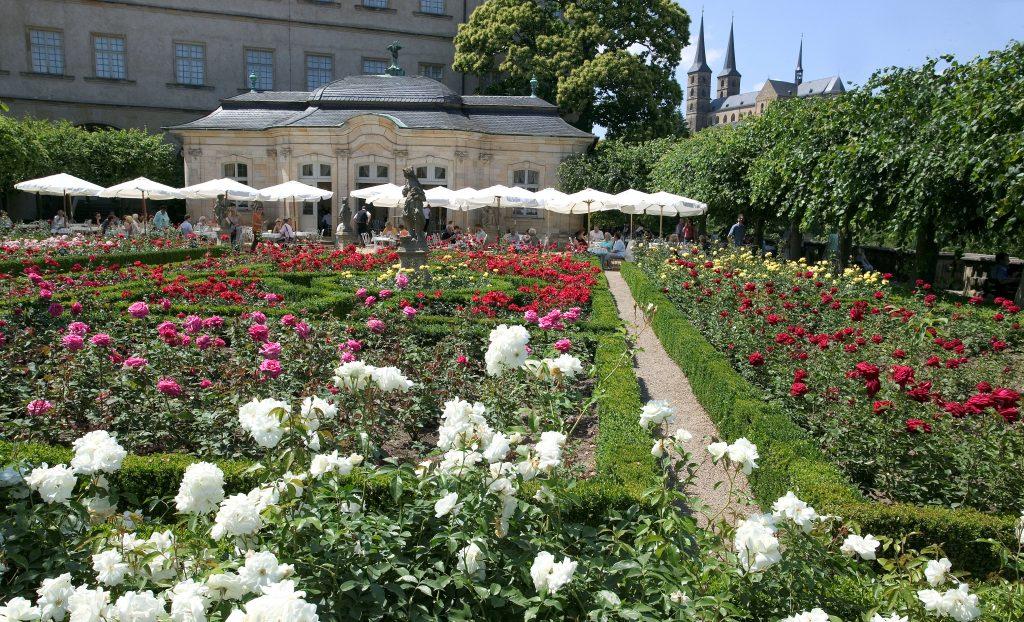 Rose garden at the Neue Residenz